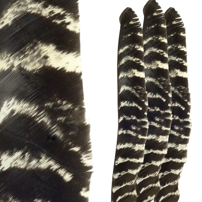BSW Naturally Barred Turkey Feathers