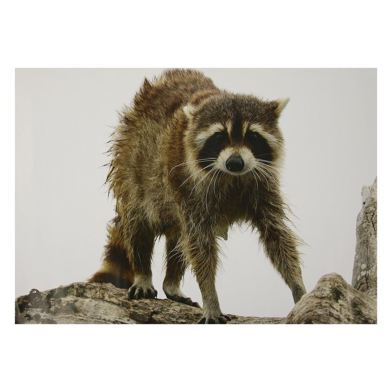 STRONGHOLD Animal Target Face - Wet Raccoon - 30 x 42 cm - hydrophobic / tear-resistant