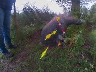 Schwein gehabt bei der BHL im Sauerthal