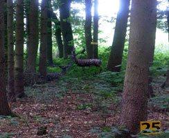 3D-Ziel im Wald